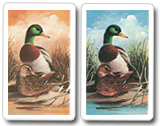 Kem Playing Cards Mallard
